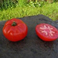 Tomate rouge de Namur