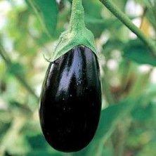Aubergine Impérial Black Beauty