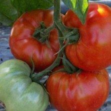 Tomate Saint Pierre