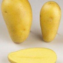 Plants de pomme de terre Allians - 1kg