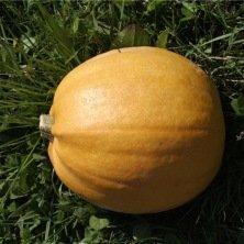 Courge Melonnette Jaspée de Vendée