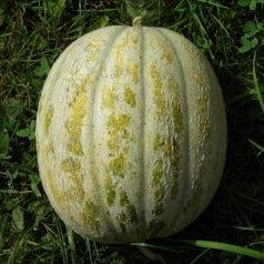 Melon de St Memmie
