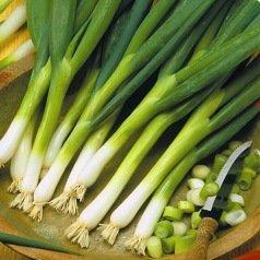 Oignon  Ishikura Long White