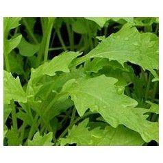 Salade asiatique Namenia