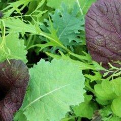 Mesclun de salades asiatiques