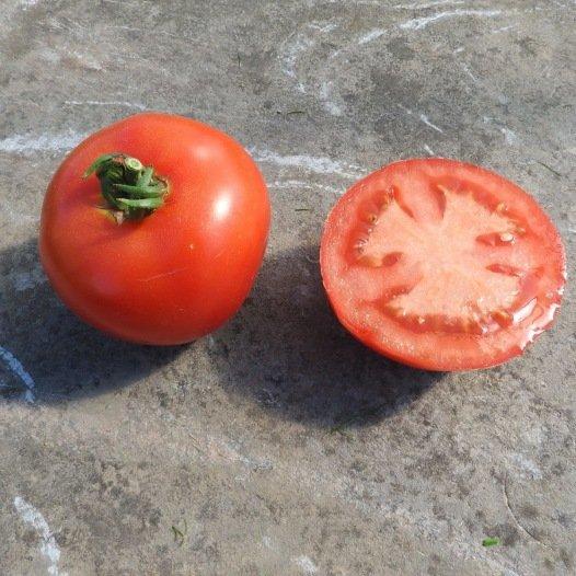 Tomate Charnue de Huy