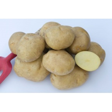 Pomme de terre Sirtema - 1kg