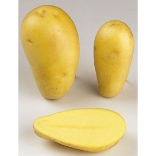 Pomme de terre Allians - 5kg