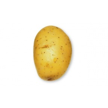 Pomme de terre Agila - 10kg