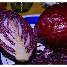 Chou cabus rouge Rodynda