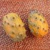 Concombre du Kénia Kiwani