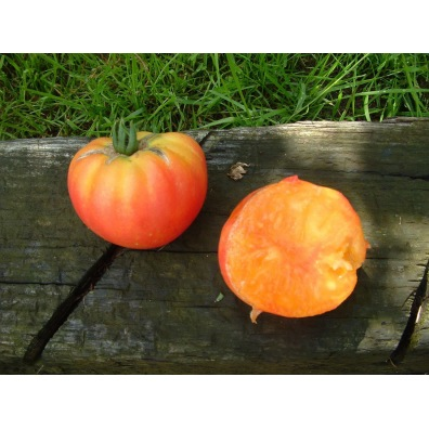 Tomate German Gold