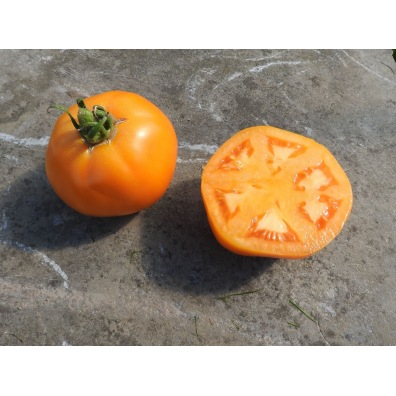 Tomate Yellow Belgian