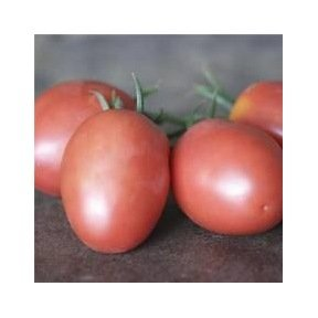 Tomate Olirose de St Domingue
