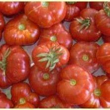 Tomate cerise Calabash rouge
