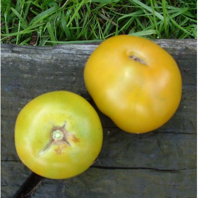 Tomate Lime Green