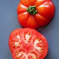 Tomate Triomphe de Liège