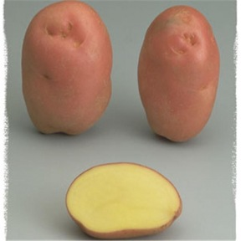 Pomme de Terre Désirée - 10kg