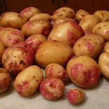 Pomme de terre King Edouard* - 10Kg