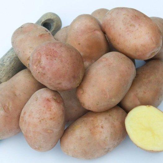 Pomme de terre Rosabelle - 10kg