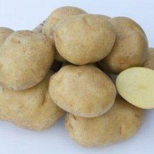 Pomme de terre Sirtema - 5kg