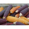 Maïs à grains Astarac