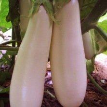 Aubergine blanche Longue de Dourga