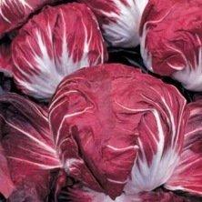 Chicorée Radicchio Rouge de Vérone