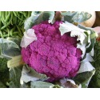 Chou brocoli violet du Cap