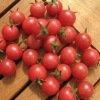 Tomate cerise Rose Quartz Multiflora