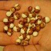 Haricot Coco Bicolore prolifique