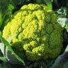 Chou-Fleur Verde di Macerata