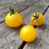 Tomate cerise Balconi jaune