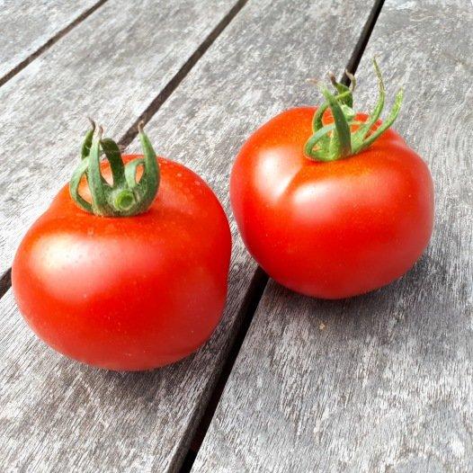 Tomate rouge Gloire de Versailles