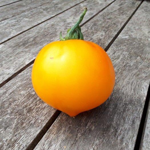 Tomate Teton de Wepion