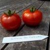 Tomate rouge Gloire de Malines