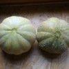 Melon Brodé Jenny Lind