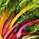 Côtes de bettes à cardes multicolores