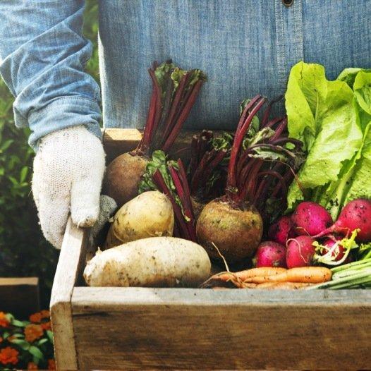 kit cadeau : légumes d'un curieux