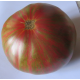Tomate Harvard Square