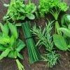 Kit semences : Mon jardin d'aromatiques