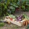 Kit semences : Des légumes belges dans mon assiette