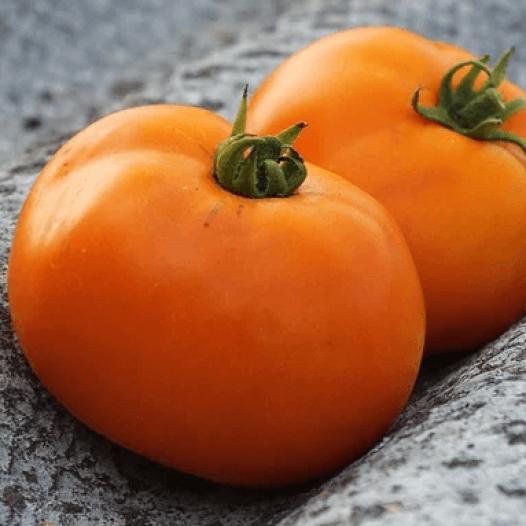 Tomate Valencia Orange