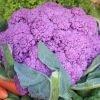 chou-fleur Violet de Sicile