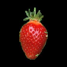 Fraisier Cireine - 25 plants - Calibre B