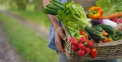 Panier garni de nombreux légumes