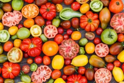 Tomates de variétés et de couleurs différentes