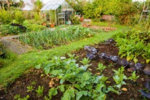 cultiver-jardin-bio-sans-pesticides-produits-chimiques-france