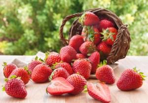 culture-fraises-plantations-fraisiers-astuces-culture-belgique-france