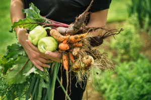 quand-planter-legumes-hiver-automne-printemps-ete-conseils-france-belgique